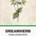 Keserűfű, álomfű (Calea zacatechichi) herba