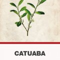 Catuaba (Trichilia catigua) kéreg